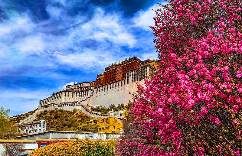 Spring in Tibet: Potala Palace Flowers